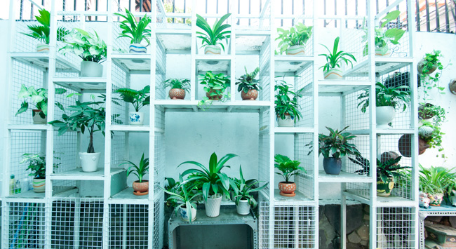 Kết quả hình ảnh cho Dịch vụ trang trí cây cảnh cho văn phòng